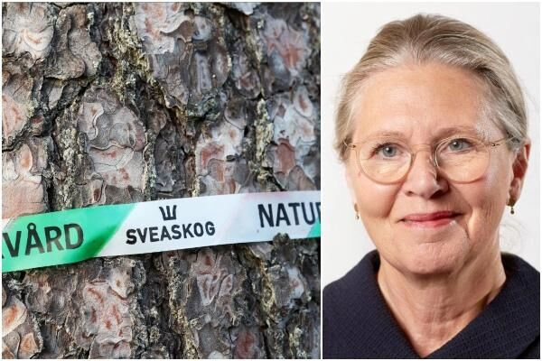 Eva Färnstrand, styrelseordförande Sveaskog.