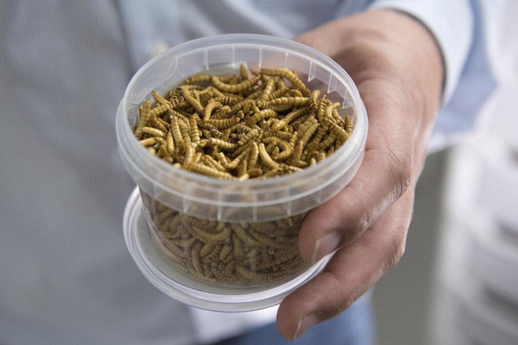 Företaget kommer nu att kunna sälja sitt proteinpulver som är producerat av mjölmaskar, och som kan användas i livsmedel (arkivbild).