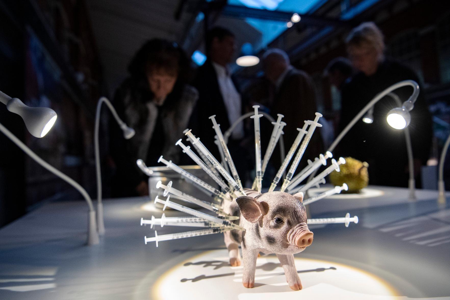 Gris med antibiotikasprutor på Disgusting food museum på Slagthuset MMX i Malmö.