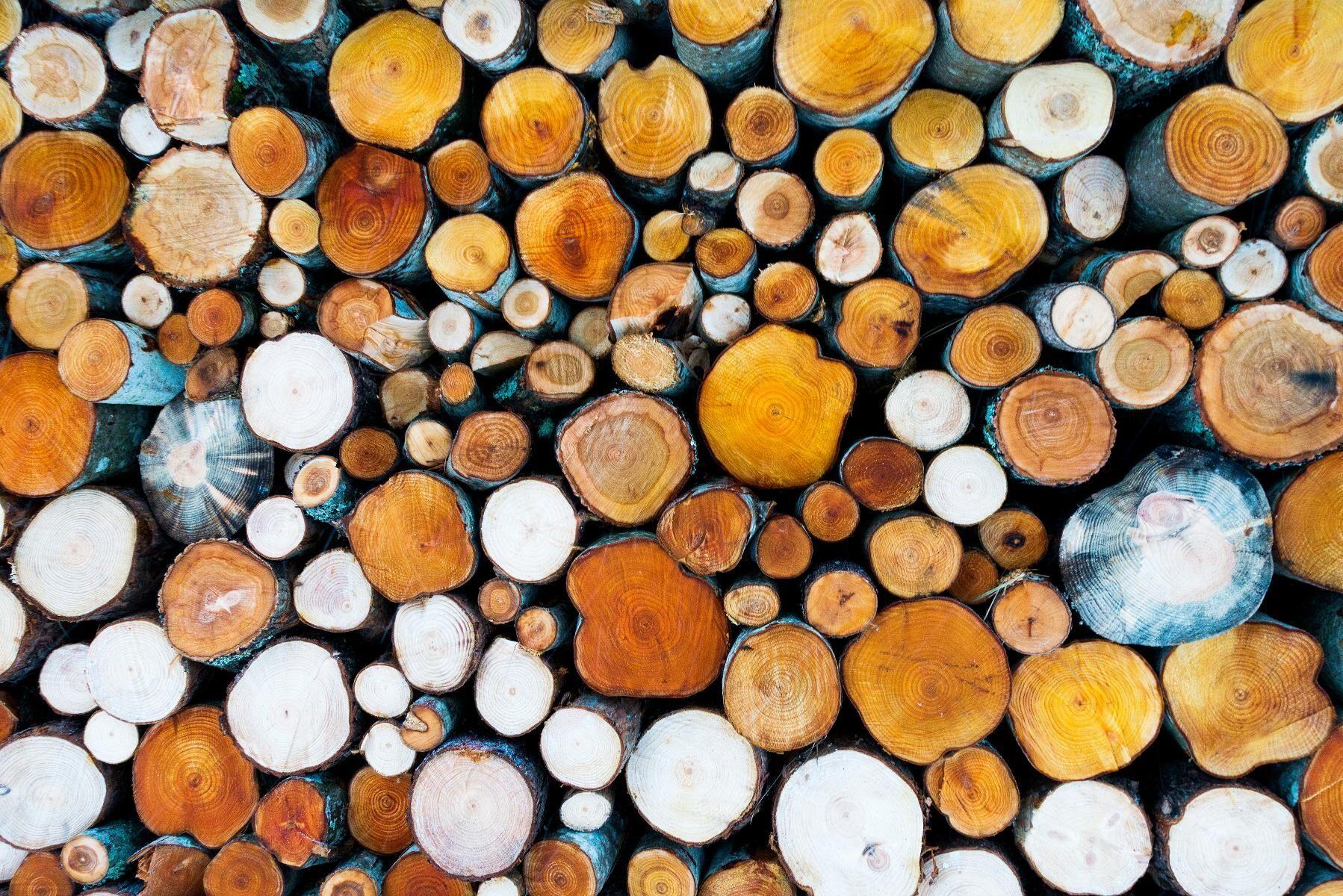 Skogsbolaget SCA rapporterar kvartalsresultat. Arkivbild.