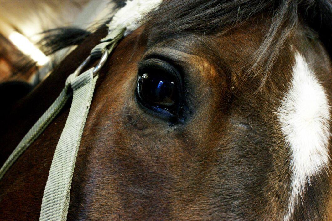 Hästarna fick svälta ihjäl efter att paret separerat. Arkivbild.