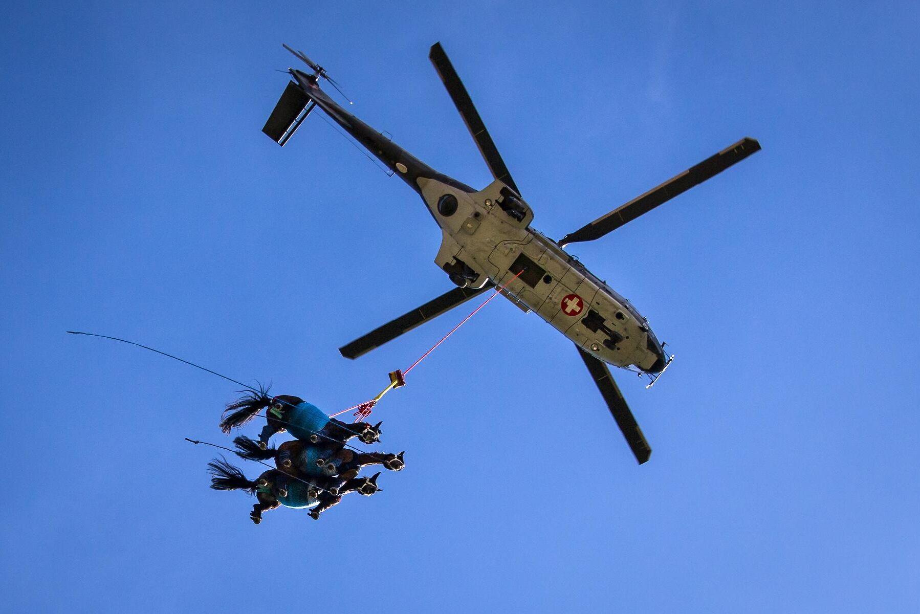 En Super Puma helikopter från det schweiziska flygvapnet fraktar tre hästar på samma flygning. Vad hästarna kände vet ingen men troligen hade de ingen uppfattning om vad som hände utöver trycket från selen runt buken och vinddraget. Ingen av hästarna visade heller inga värden som tydde på påtaglig stress eller annan oro.