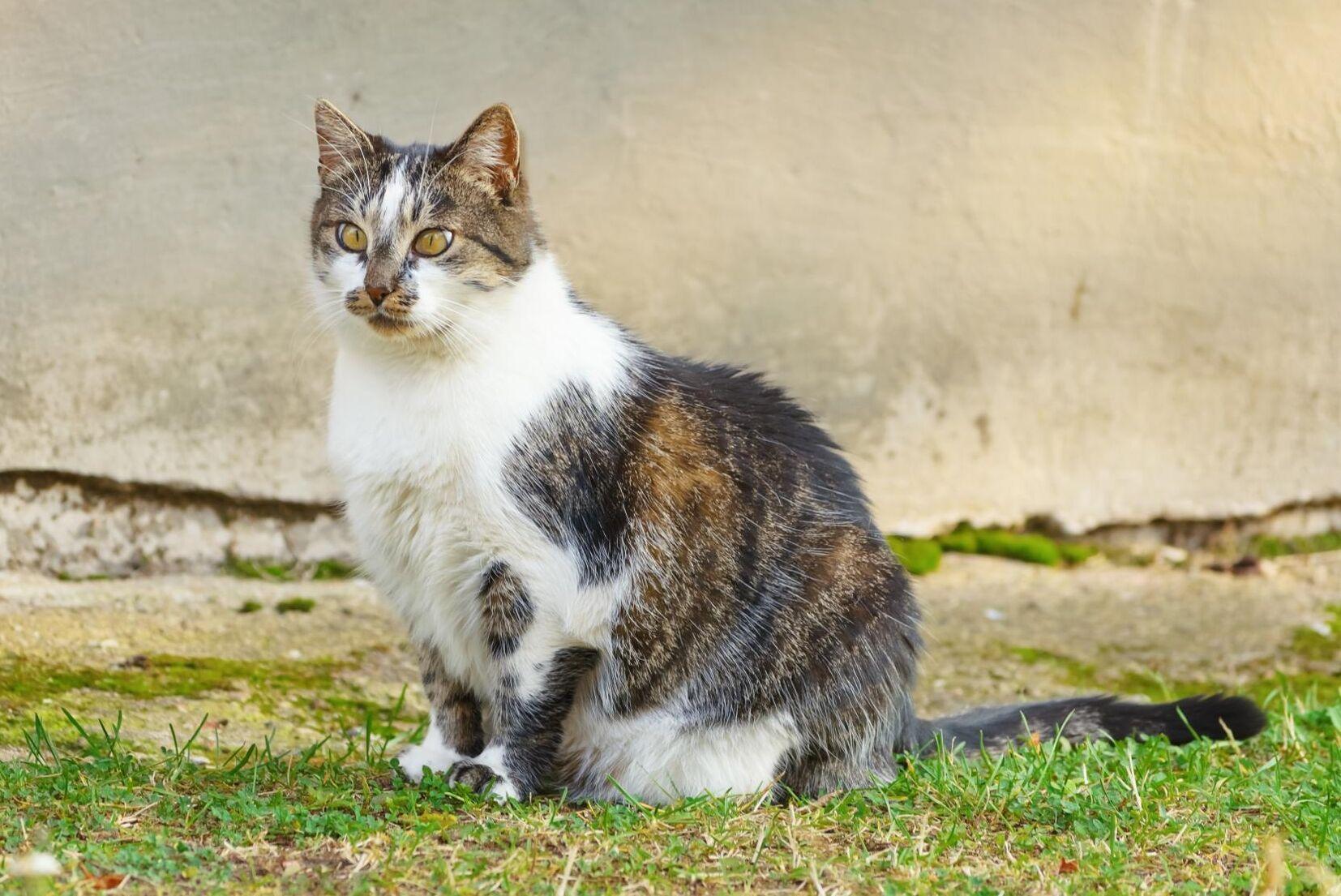 Från den 15 juni gäller nya föreskrifter för alla som har katter, även lantbrukare.