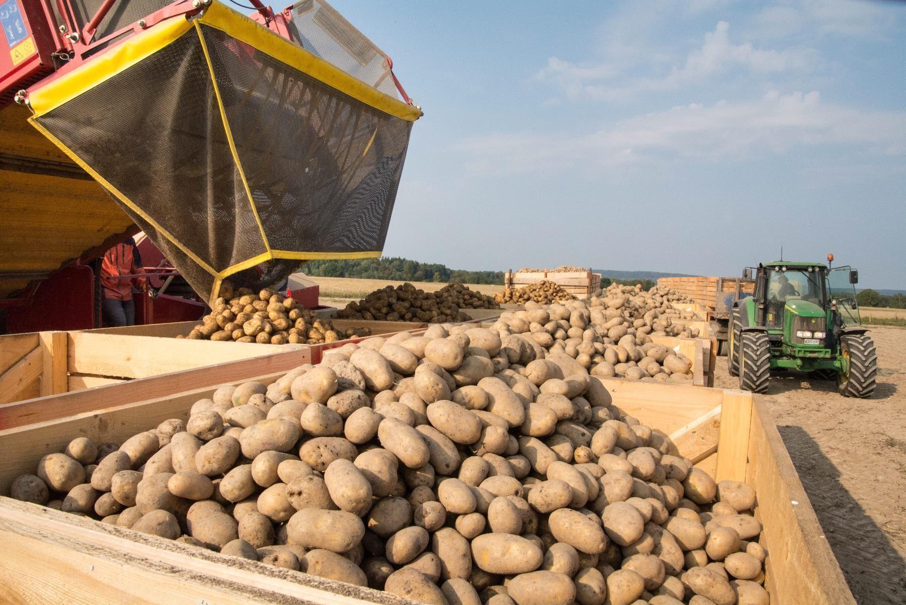 Kampanjer för eko och vegoprodukter har minskat. Arkivbild på ekologiskt odlad potatis.