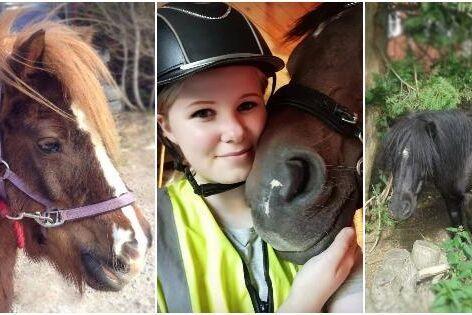 Amanda Svedegårds ponnyer blev av misstag skjutna till döds av en jägare som nu döms till böter.