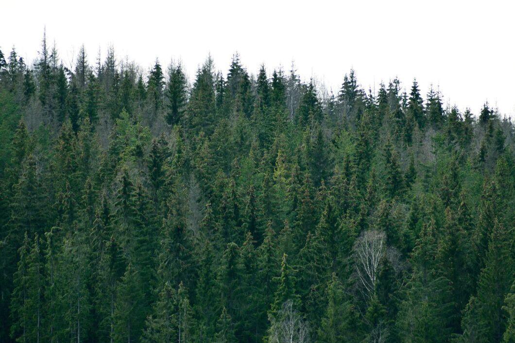 I nuläget är 41 procent av den enskilt ägda skogen certifierad.