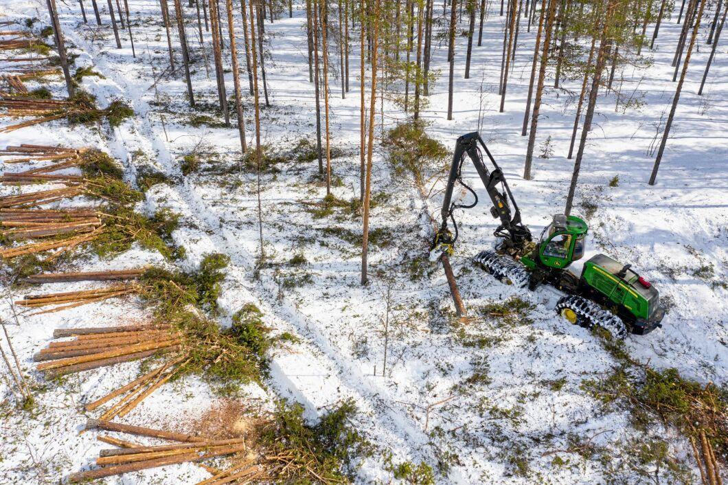 Totalt anmälde och ansökte skogsägarna om avverkning av 274221 hektar skog under 2020 (arkivbild).