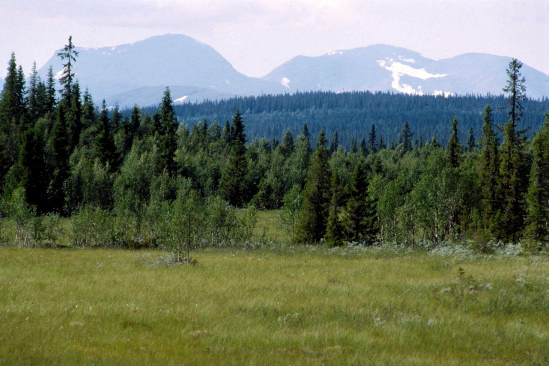 Under 2020 betalade Skogsstyrelsen ut 23 miljoner kronor i intrångsersättning i fjällnära skog, och för i år beräknas det bli 360 miljoner kronor.