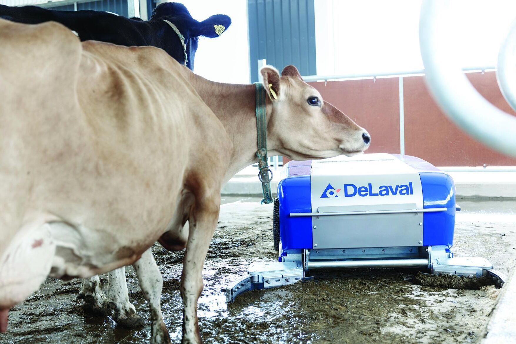 Roboten hjälper till att öka både kokomforten och klövhälsan, enligt De Laval.