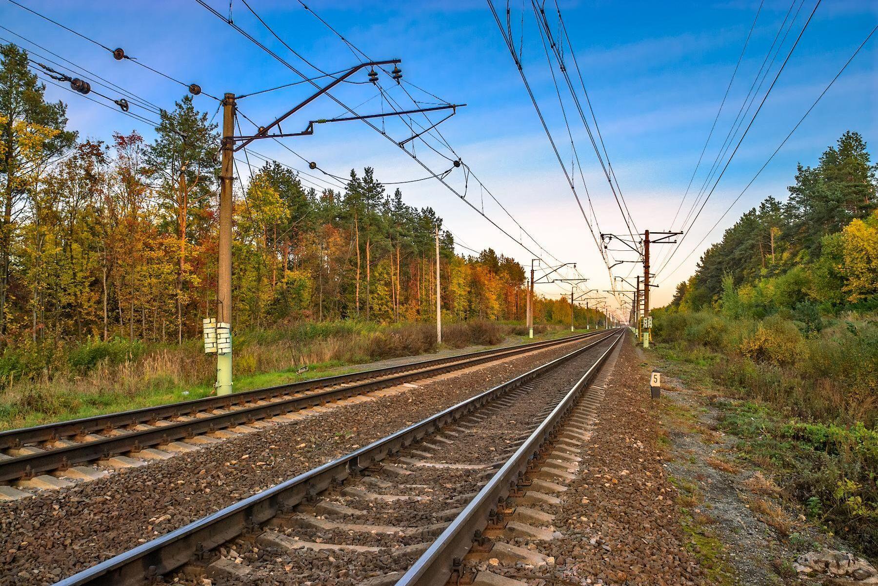 1424 tamdjur om året rapporterades in som påkörda på järnvägen mellan 2012 och 2020.