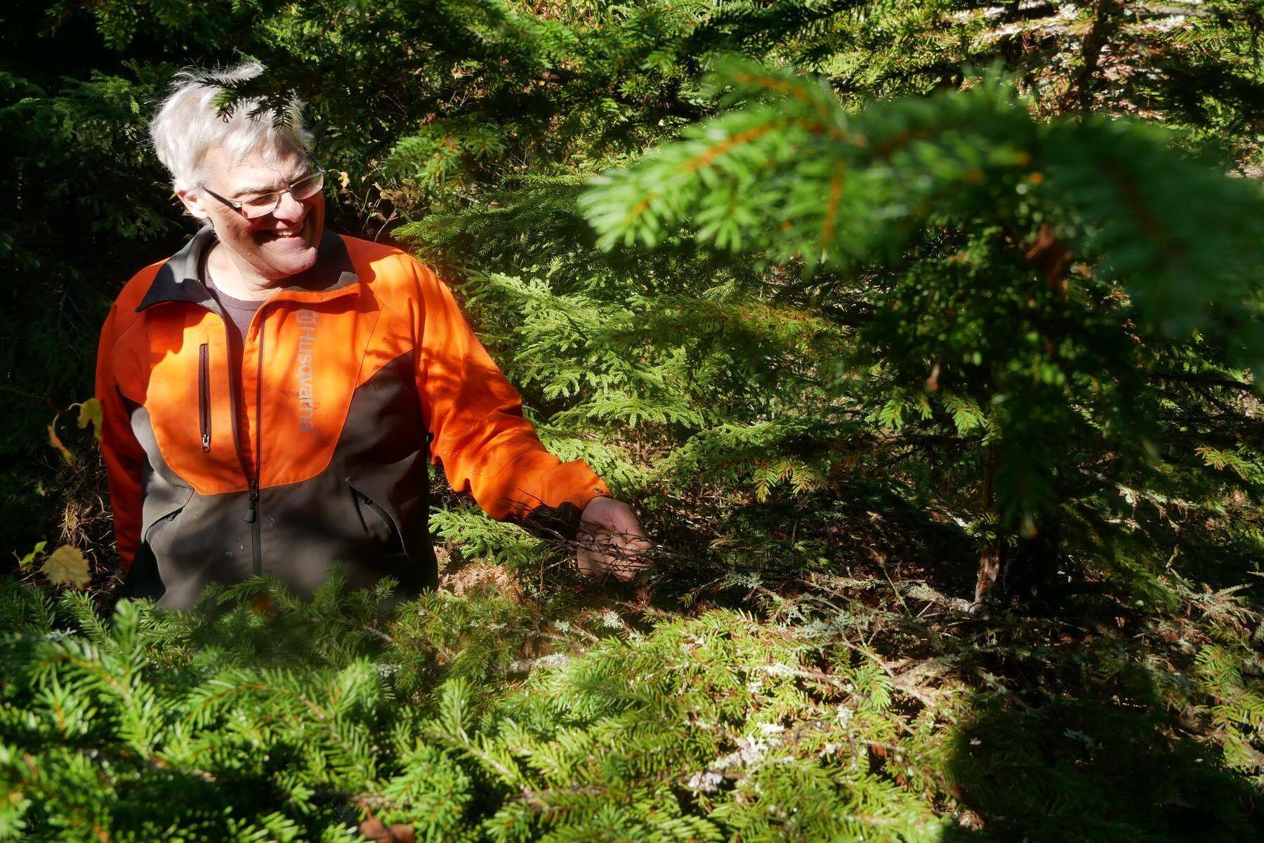 50 000 kronor i minskade intäkter - per hektar. Det räknar Michael Andersson att de omfattande granskadorna i en del av hans bestånd kostar.
