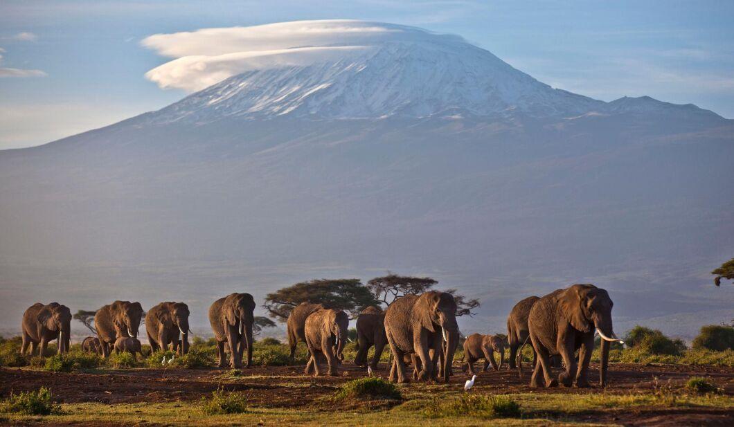 Elefanter i nationalparken Amboseli i södra Kenya (arkivbild).