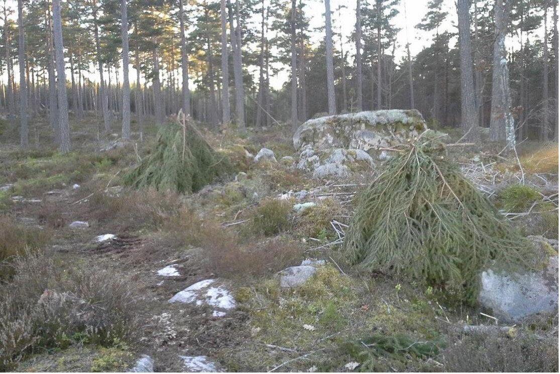 Trefotsburen är tänkt att skydda enskilda träd.