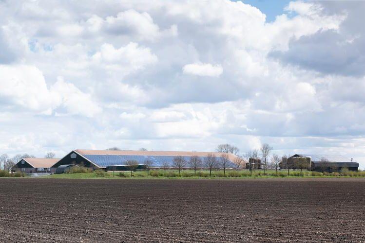 Har du en solpanel och är leverantör till Arla? Då kan du få en extra slant för dina ursprungsgarantier om du säljer dem direkt till mejeribolaget.