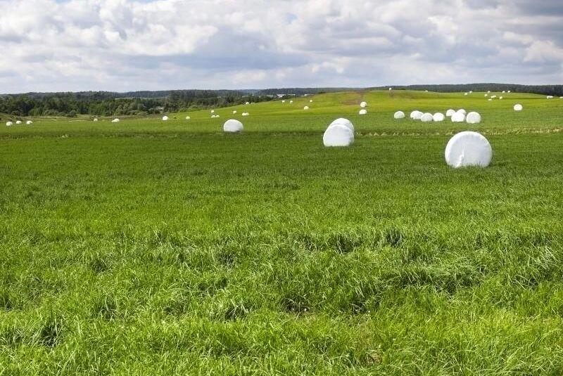 Hamra Gård ökar sin vallareal rejält för att säkra grovfodret till gårdens 500 djur.