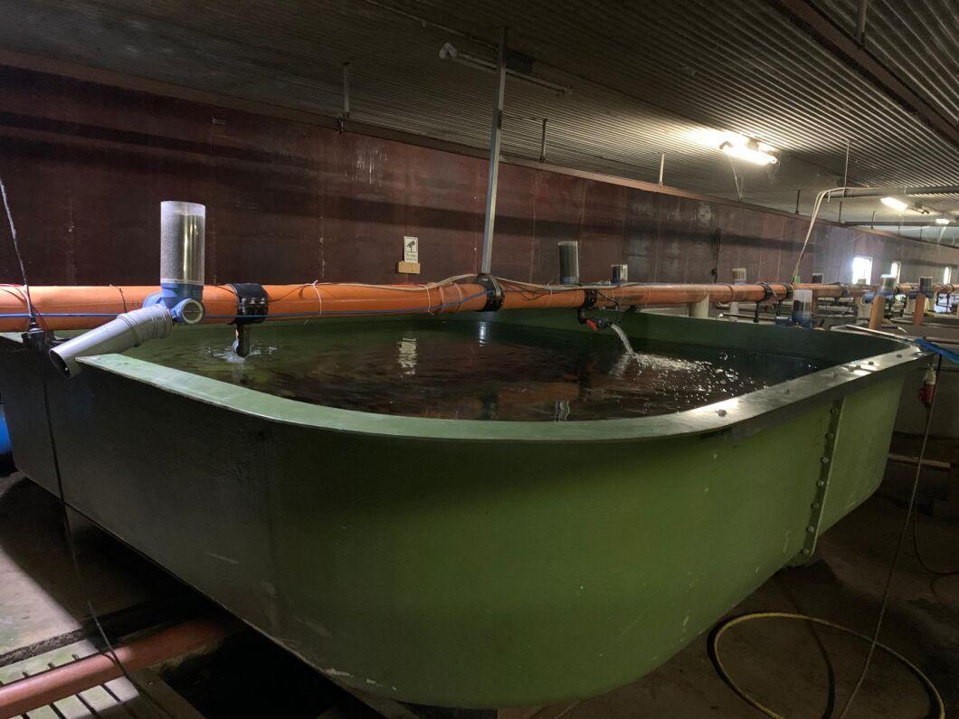 Vadstena Fisk packar ungefär 100 kilo filé varje vecka.