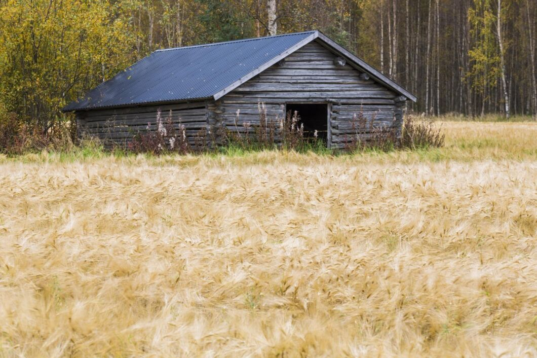 Spannmålsodlingen har gått tillbaka stort de senaste 20 åren i norrlandslänen.