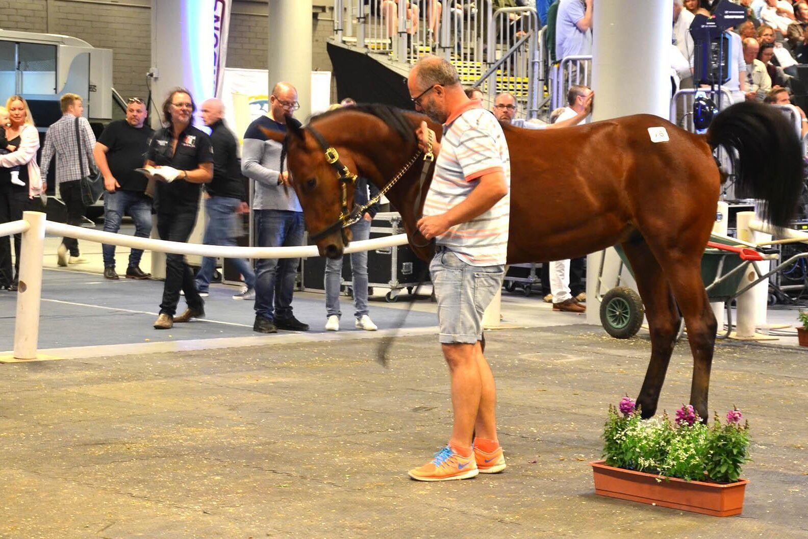 Hingsten Foreign Rain såldes för 950 000 kronor på fredagskvällens Elitauktion. Uppfödare till hästen är Thomas Lind-Holm.