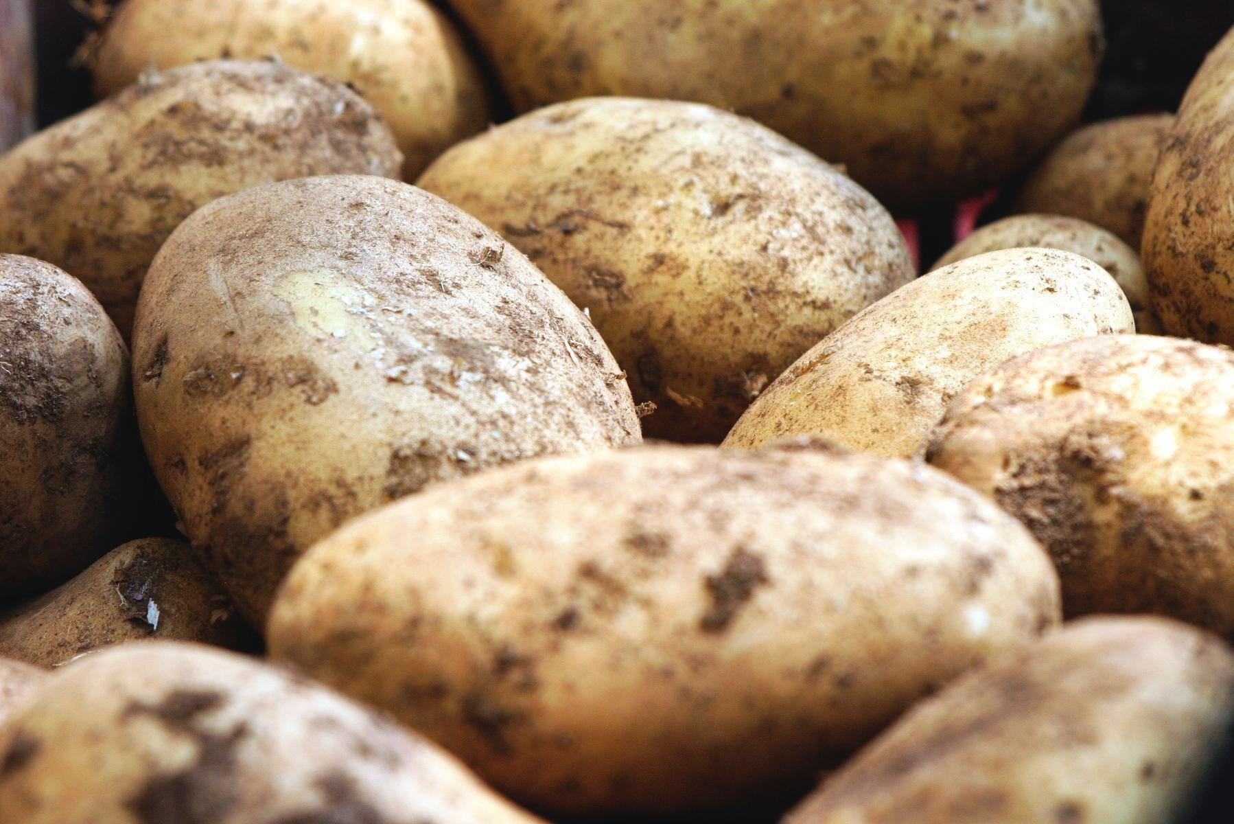 För många potatisodlare är lagringen mycket viktigt ekonomiskt, eftersom odlaren får betalt efter kvalitet.