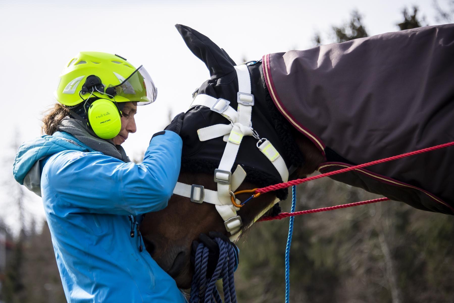 Förutom anpassade selar och lyftanordningar förseddes hästarna också med utrustning som blindhuvor och dövades för att inte bli skrämda. Dessutom gavs de lugnande medel innan lufttransporten.