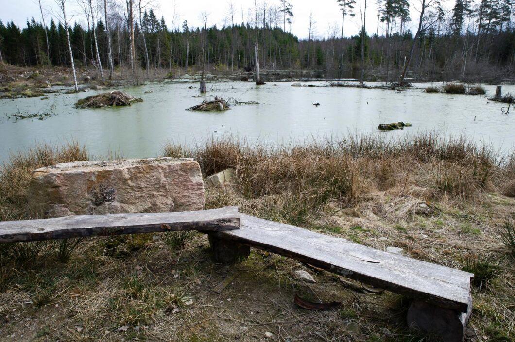 Lantbrukare och skogsägare som gör naturvårdsarbete kan få hjälp av volontärer och praktikanter från EU.