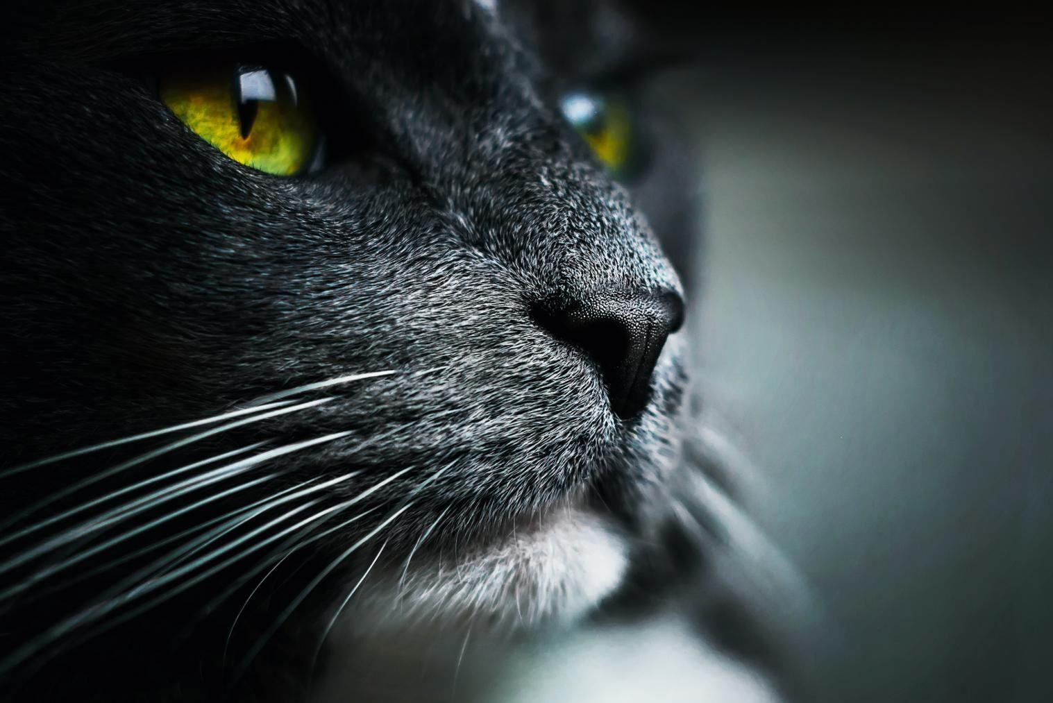 Flera katter på danska minkfarmar har avlivats. På en gård hittade man Corona i 12 av 24 katter.