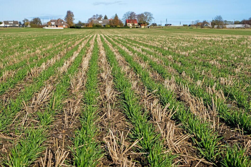 'Conservation agriculture' med minimerad jordbearbetning, direktsådd och mellangrödor ger många fördelar, framför allt att jorden klarar mer extrema väderförhållanden.