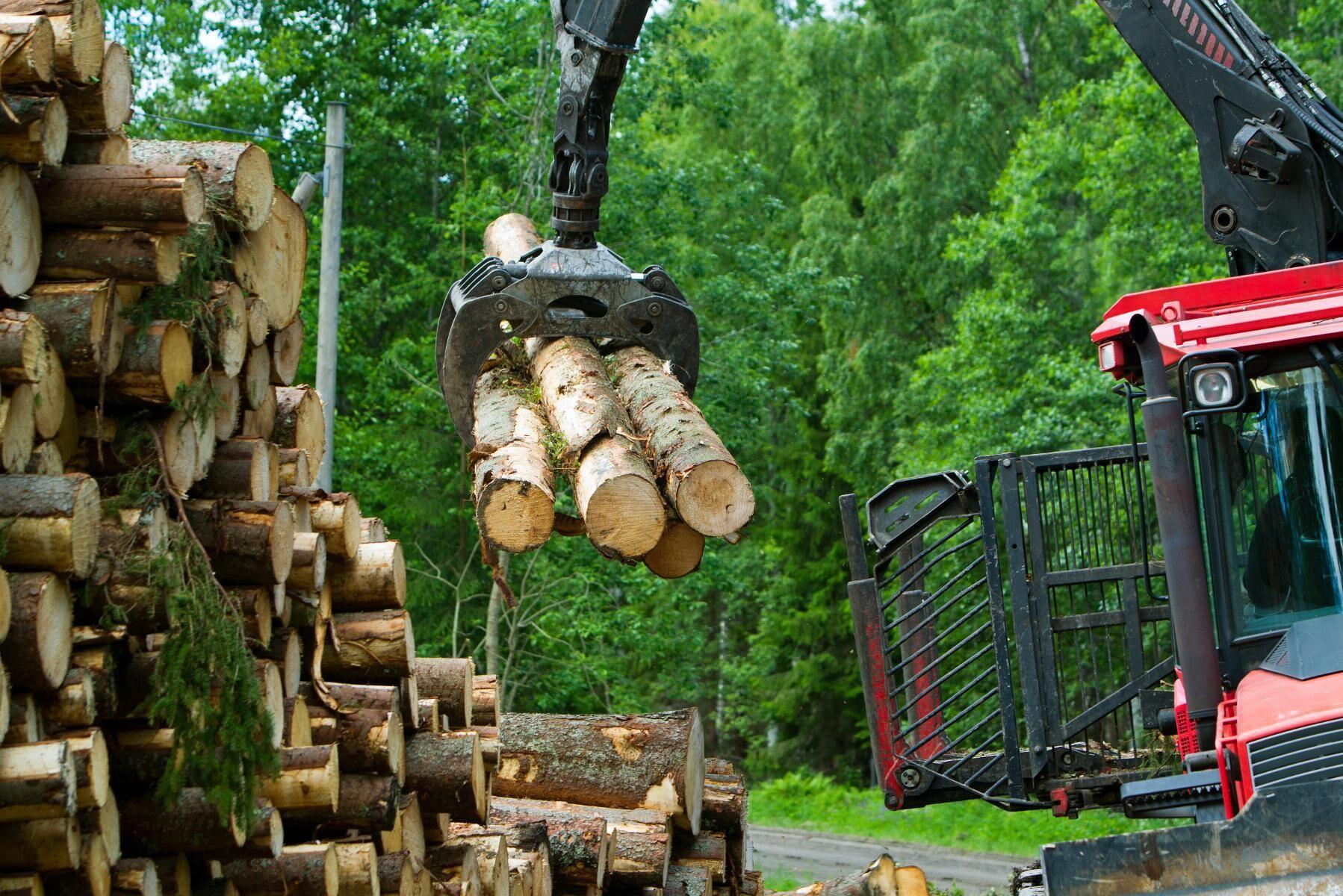 Bär- och skogsindustrin kan komma att påverkas av regeringens nya förslag angående utländsk arbetskraft.