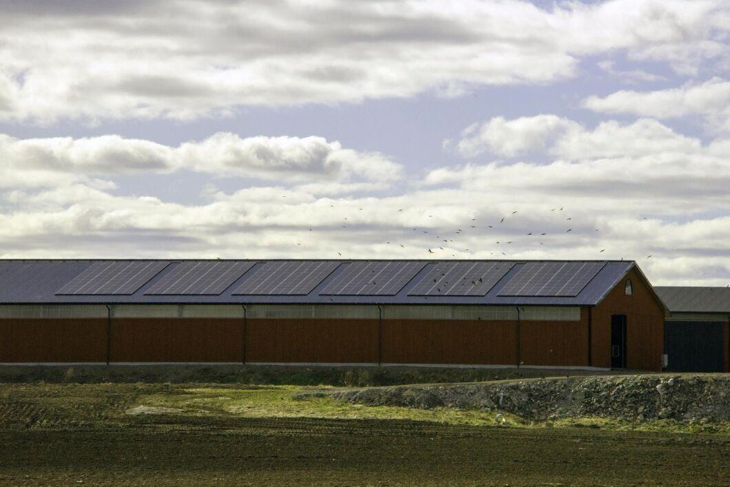 På Västra Toleruds Gård finns 240 solceller på uthustaken som vätter mot öster. Lika många vätter åt väster. Det ger jämn elproduktion så länge solen är uppe.