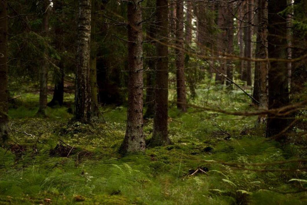 Just nu pågår en dragkamp om 900 hektar skog i Kinda och Ydre. Arkivbild.