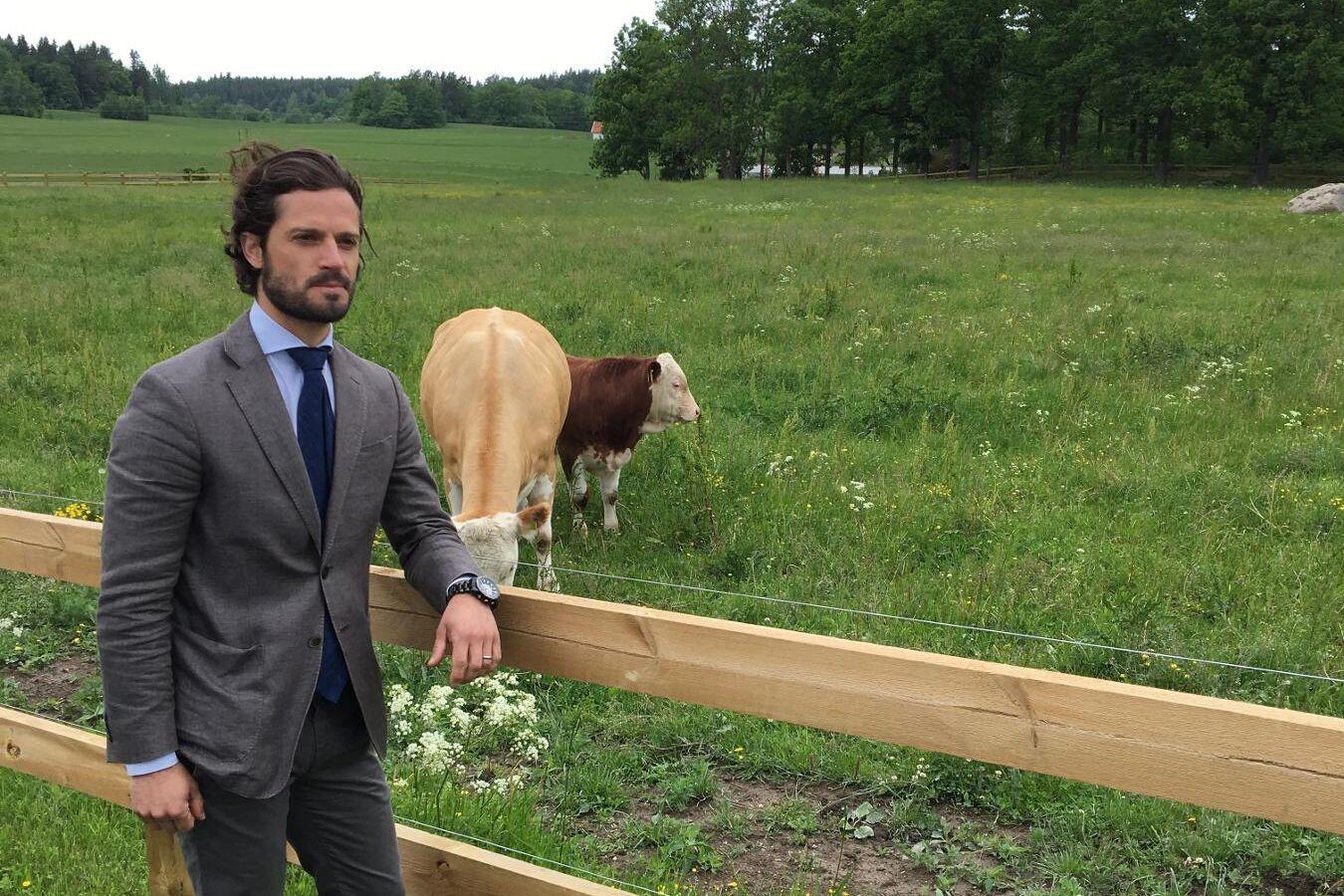 Prins Carl Philip tillsammans med tjurkalven som representerar Stenhammars framtidshopp.
