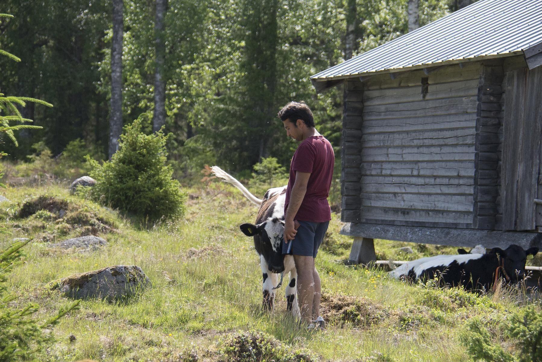 Baqer Mosawi har skaffat sig ett liv i Sverige med djuren och säljer sina egna produkter till folket i bygden.