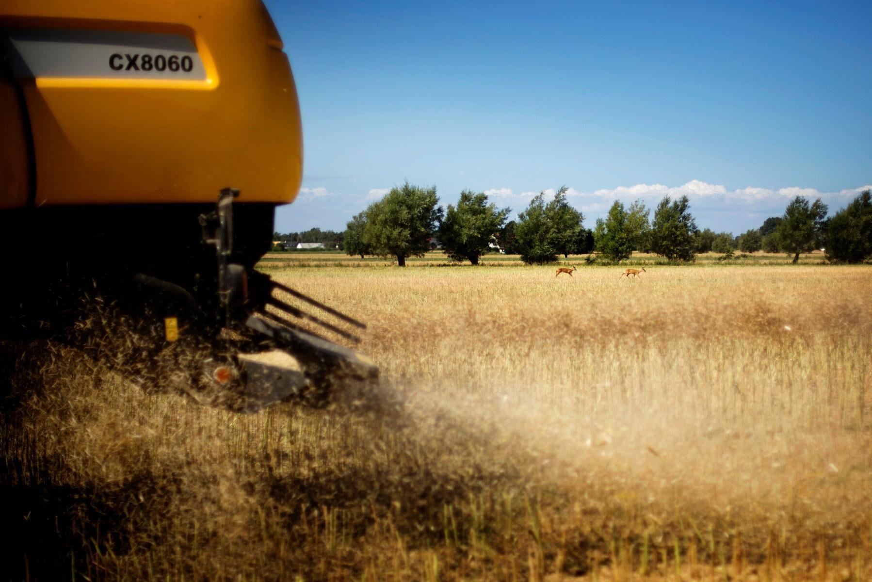 """""""Vår uppmaning till lantbrukare som måste leverera under skördeperioden är att säkra av en del av den förväntade skörden"""", säger Mats Eriksson på BM Agri (arkivbild)."""