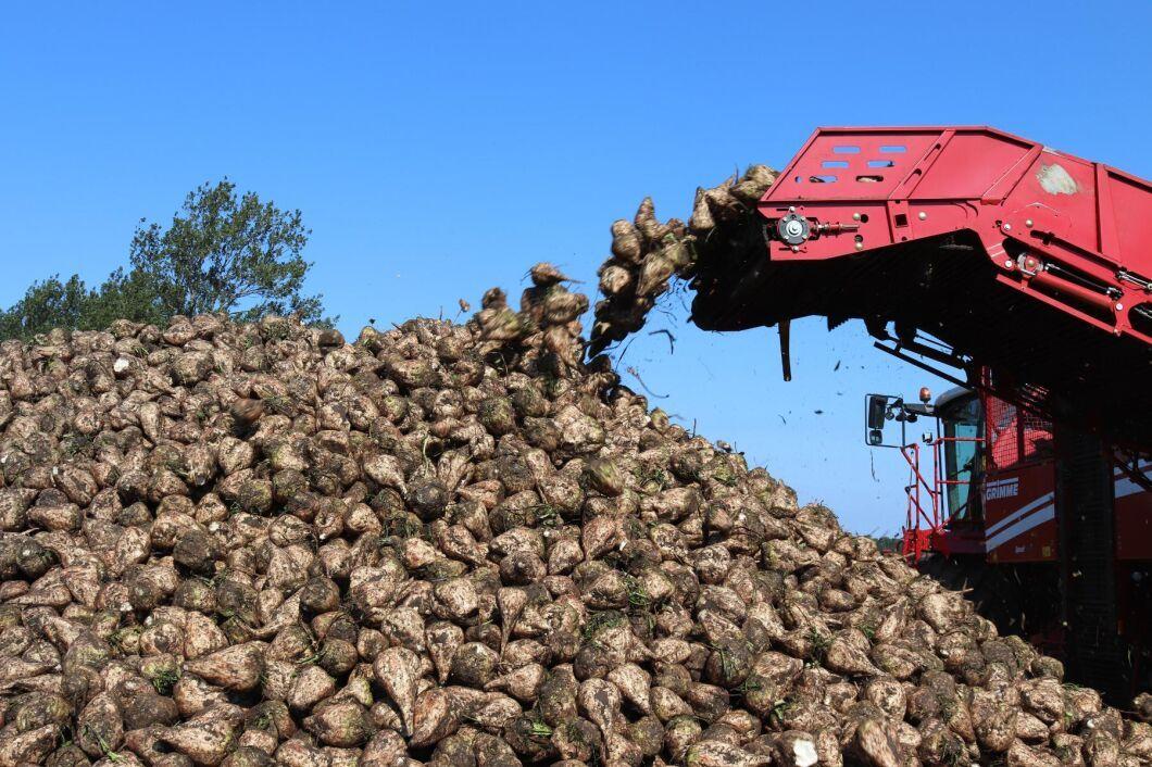 Bengt Nilssons Maskinstation i Södra Kverrestad startade betupptagningen förra veckan. Nu riskerar många odlare att få bromsa upptagningen och lämna betorna i jorden längre än planerat.