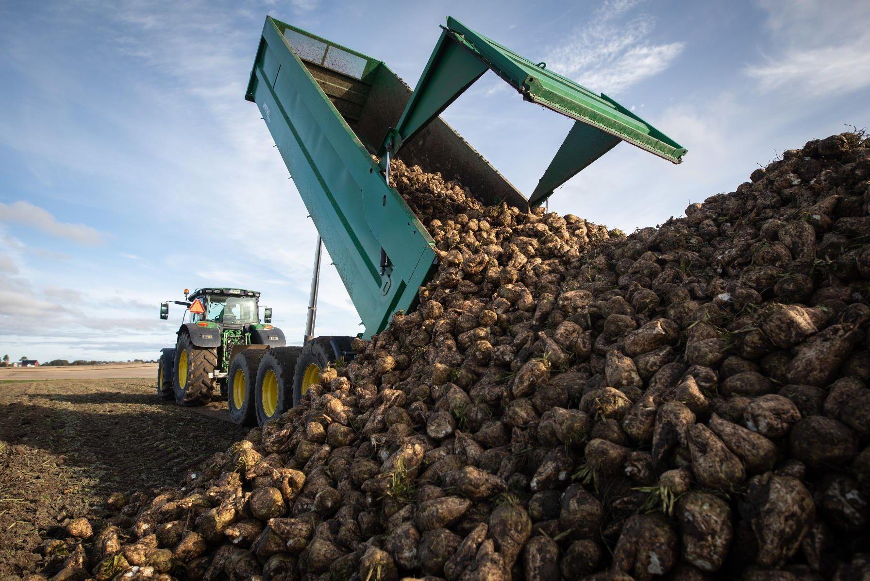 Vissa EU-länder har gett sockerbetsodlare dispens för att använda förbjudna neonikotinoider. Arkivbild.