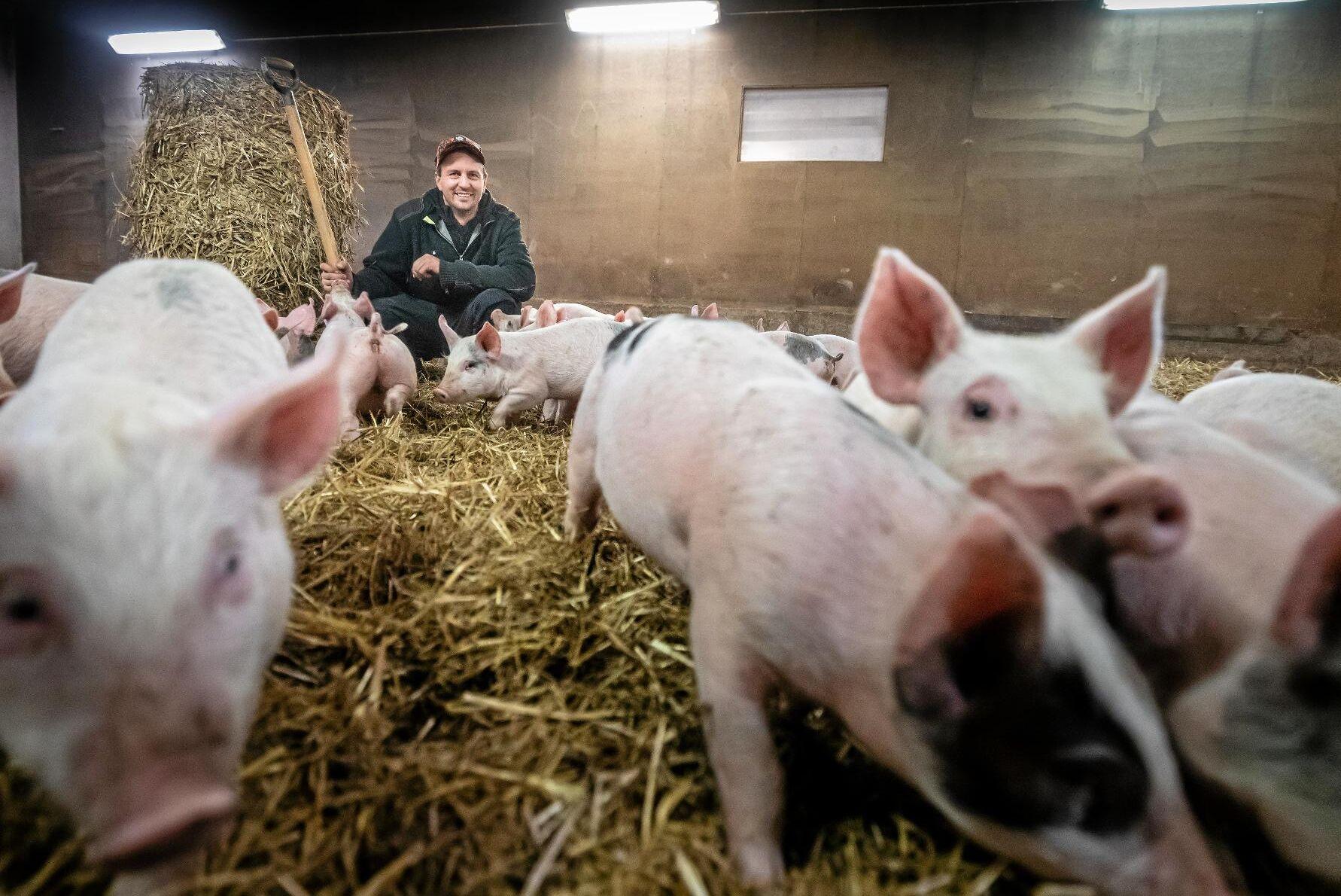 Djuromsorgen har alltid varit en viktig del i grisproduktionen på Ramstad gård och den byggnation som fanns på gården fungerade väl.