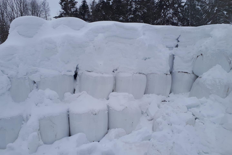 15 minusgrader i Selånger, Sundsvall och långt till våren, skriver Anders Sundquist