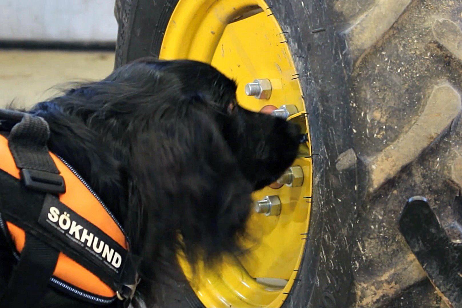 Projektet hoppas kunna ge hundarna mer uppgifter inom lantbruket.