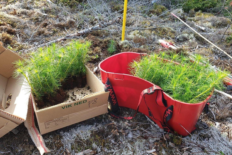 Svenska skogsplantor har fattat beslut om att investera totalt 100 miljoner kronor i sina anläggningar för att öka produktionskapaciteten för mekaniskt behandlade plantor.