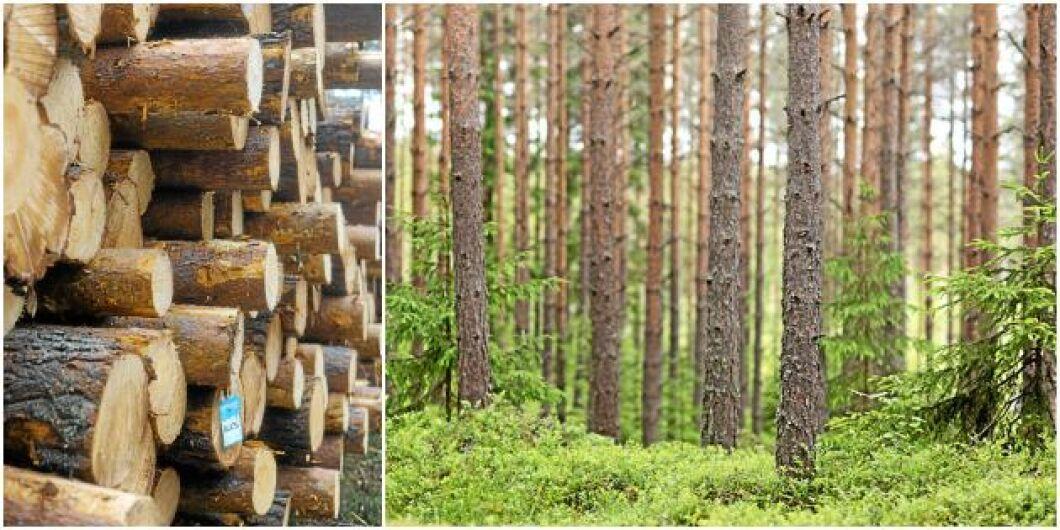 Mellanskogs resultat efter skatt för helåret 2018 landar på 35,3 miljoner kronor.