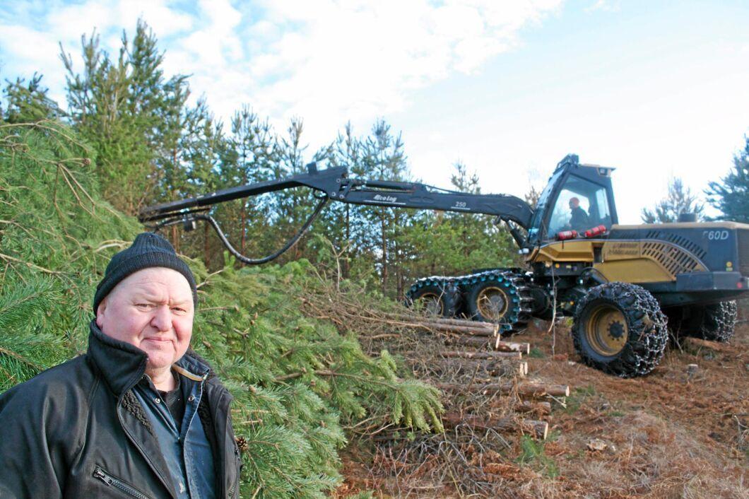 I mitten på februari började Sten Ivan Danielssons svampangripna tallbestånd att avverkas för att hindra smittspridning. Två månader senare låg träden fortfarande kvar i väntan på flisning.