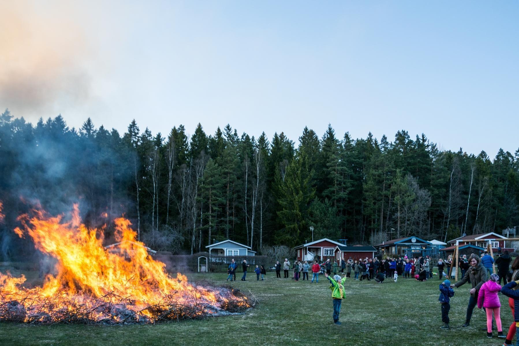 Medeltida kosläpp är en av anledningarna till att vi i dag firar Valborg.