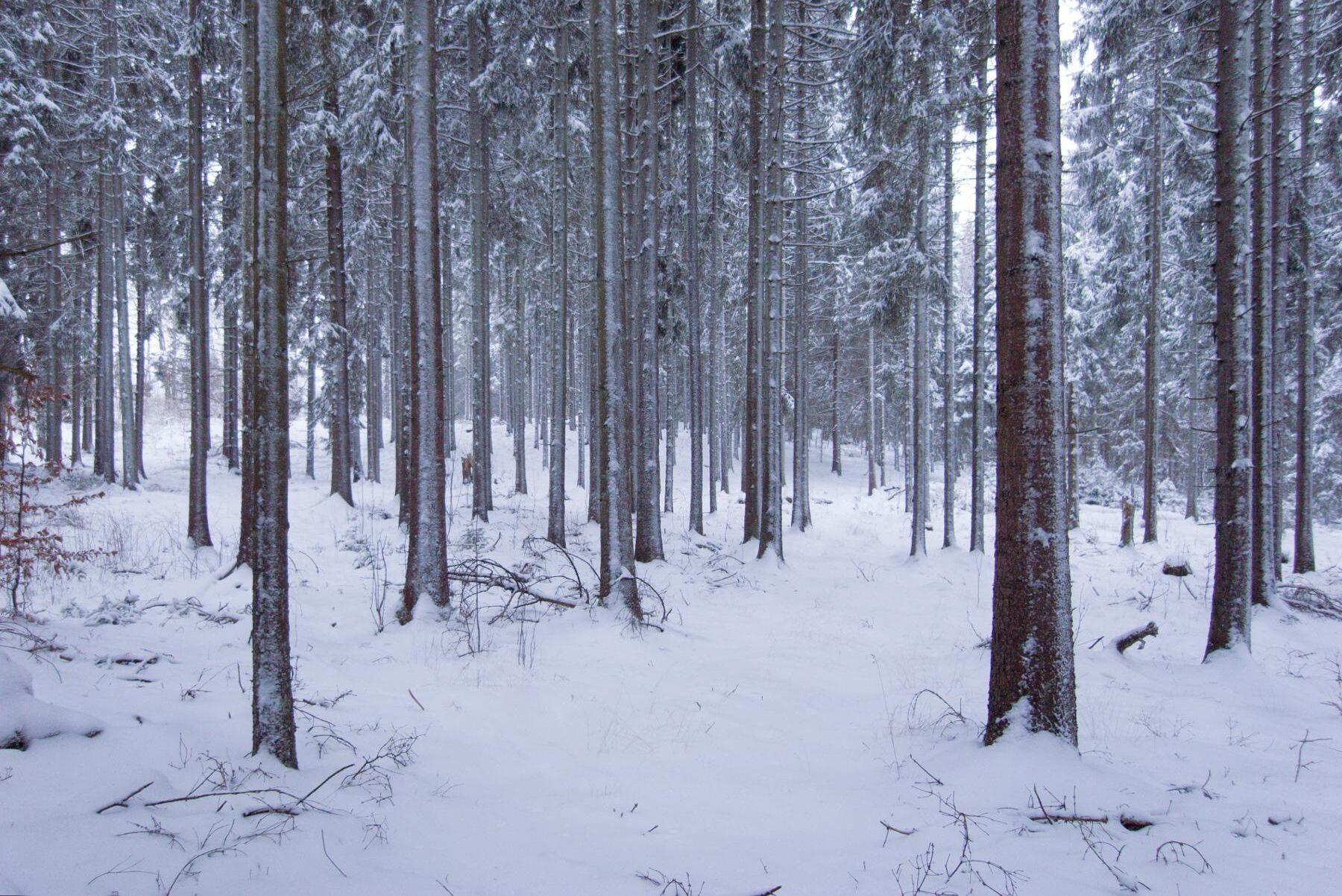 Skogspriserna i Sverige har stigit kraftigt under 2020, visar färsk statistik.