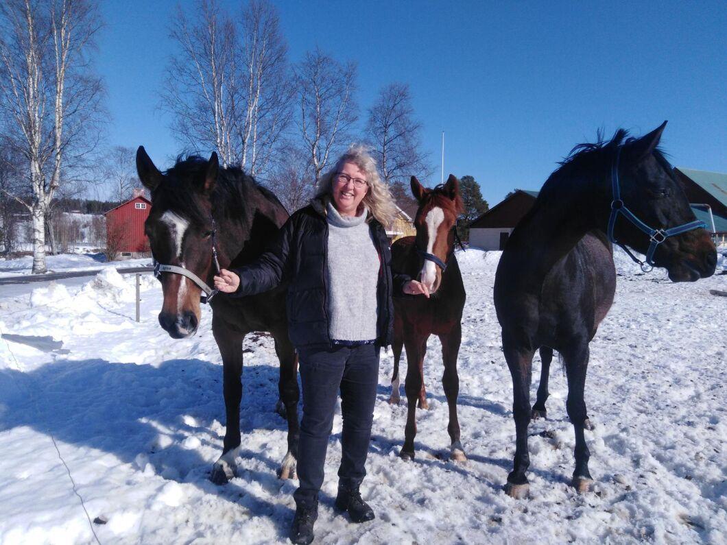 Ingrid Ragnarsson föder upp hopphästar på elitnivå i Norrbotten. På bild syns hästarna Northern Cupcake, 7 år, som är syster Northern Light som tävlar i kanadensiska landslaget. Ettåringen är Northern Chocorina och den mörkaste är Cher Petite vars pappa Chacco Blue var en superhingst. Cher Petite är 10 år.