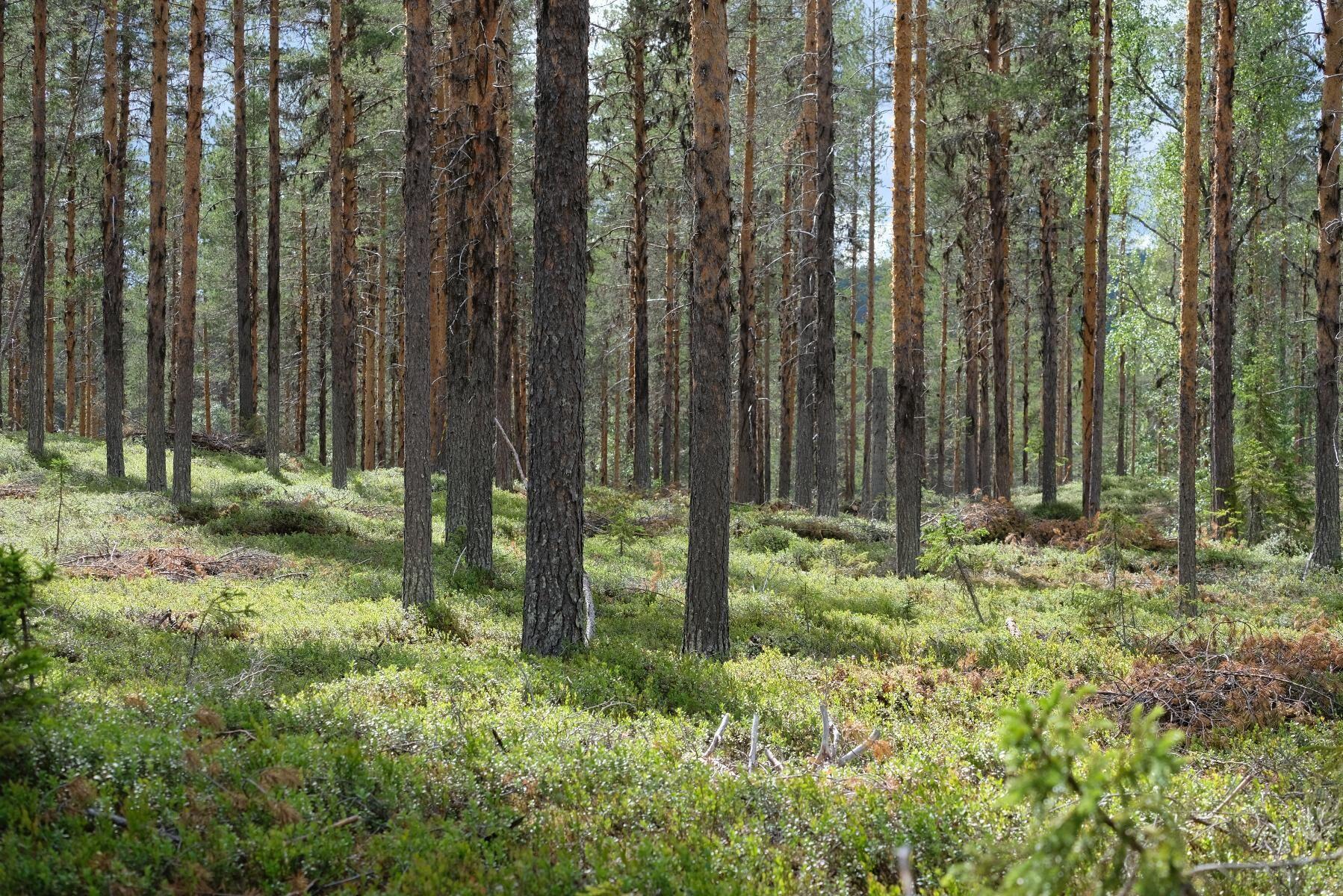 Nya läropaket till gymnasieelever ska vända trenden med gradvis minskat antal sökande till skogsutbildningar.