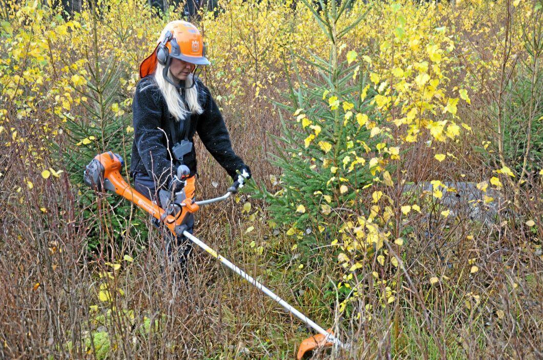 I år kan finska skogsägare få stöd för vård av 124 000 hektar ungskog.