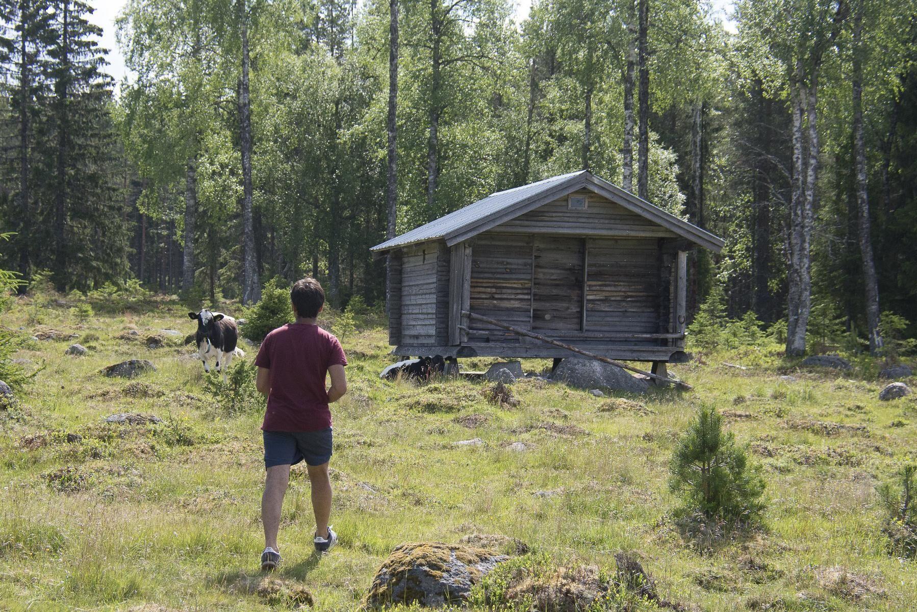 Exakt hur och när Baqer Mosawi ska lämna Sverige är i nuläget oklart på grund av coronapandemin.
