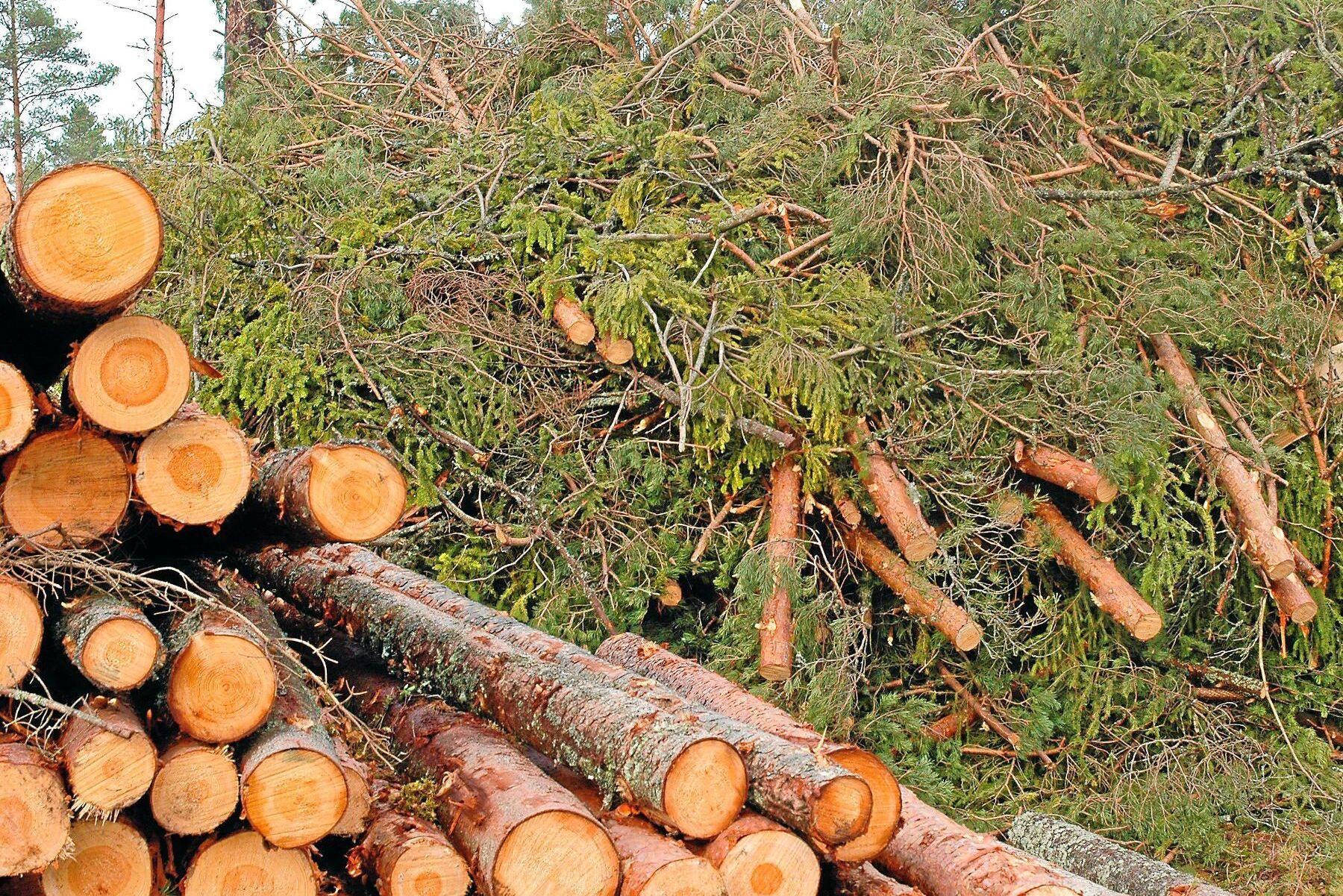 Med ett jord- och skogsbruk i framkant har Sverige goda förutsättningar att få i gång en stor inhemsk produktion av biobränslen, skriver John Widegren (M), landsbygdspolitisk talesperson.