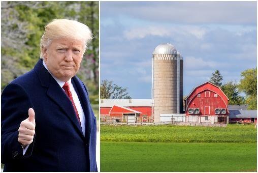 Trots att USA:s handelskrig med Kina har drabbat lantbruket hårt är stödet till president Donald Trump rekordstort.