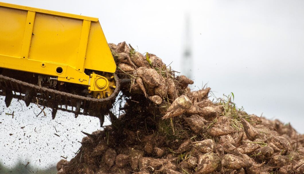Frankrikes odlare av sockerbetor ska återigen få lov att använda flera förbjudna substanser.